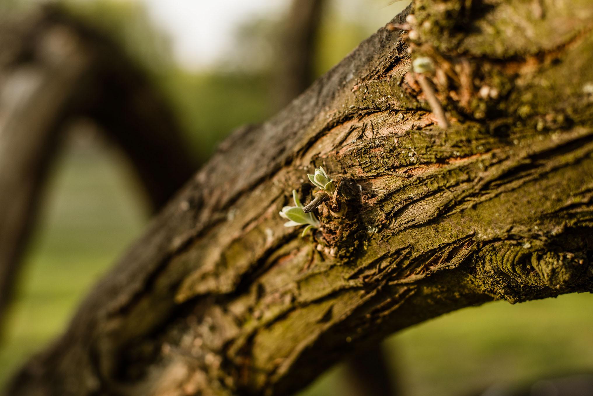 drzewo- krawczyńscy pracownia fotograficzna